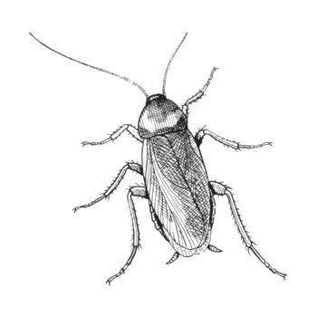 Lee más sobre el artículo Tengo cucarachas en casa