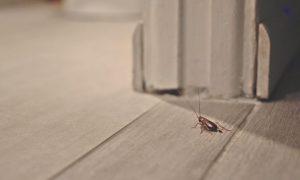 Lee más sobre el artículo ¿ Que hago después de que me fumiguen mi casa?